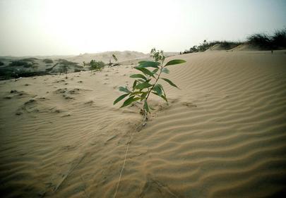 Foto di una pianta cresciutta nel deserto.