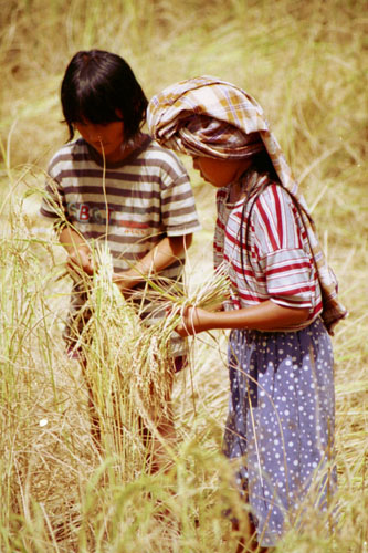 Young children working in a field in Indonesia.