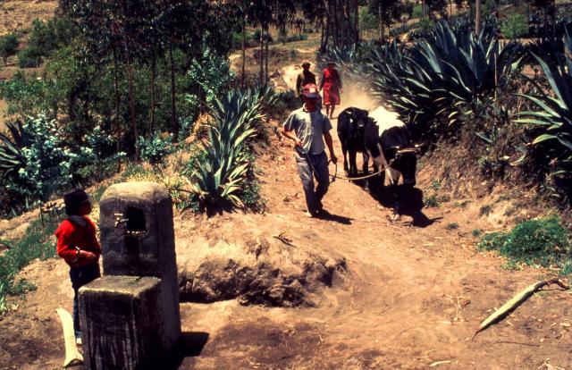 Forniture d'acqua in un villaggio isolato sulle Ande (Ecuador). Un bambino vicino ad una fonte d'acqua e un allevatore con due bovini.