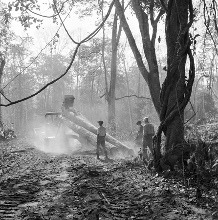 In a clearing in the Myinbyin Forest Range, Central Burma, FAO expert J.L. Briggs (right), of Australia, supervises the work as a tractor winches up logs of teak wood and hauls them away to the dispatch point.