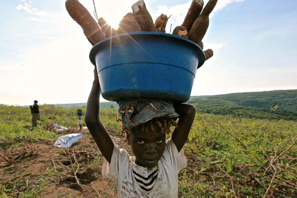 congolese child whom carries a basket full of tuber
