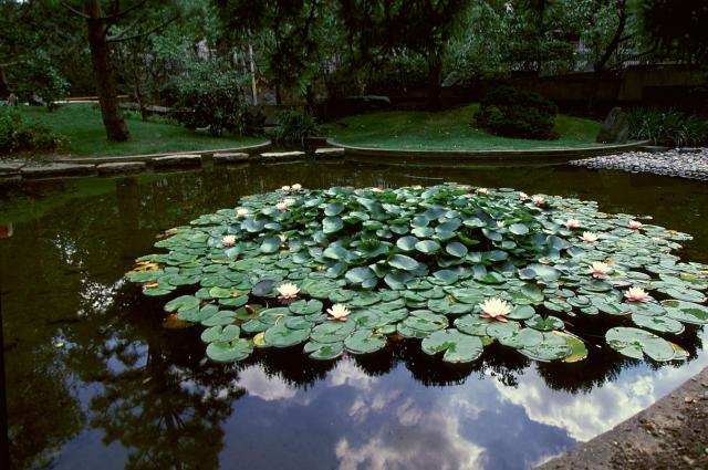 Sede centrale dell'UNESCO a Parigi, foto di ninfee al Garden of Peace (o Japanese Garden). Dono del Governo Giapponese nel 1958, installato dal giardiniere Giapponese Toemon Sano.