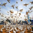 Doves, symbols of peace, are freed near the shrine of Hazrat Ali in the city of Mazar Sharif, Afghanistan, on the International Day of Peace.