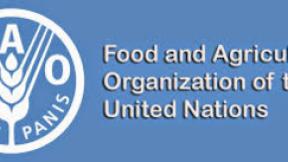 Logo - Organizzazione per il cibo e l'agricoltura delle Nazioni Unite