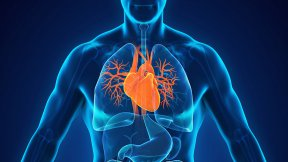 Gli organi umani vista in 3D