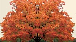 Albero autunnale, immagine del convegno Una Chiesa custode della terra