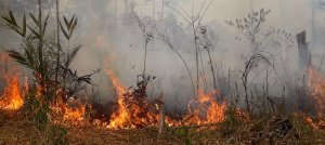 A fire burns in the Amazon rainforest in Brazil